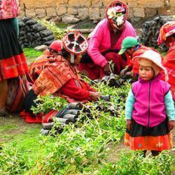 Peruvian families tree planting Andes