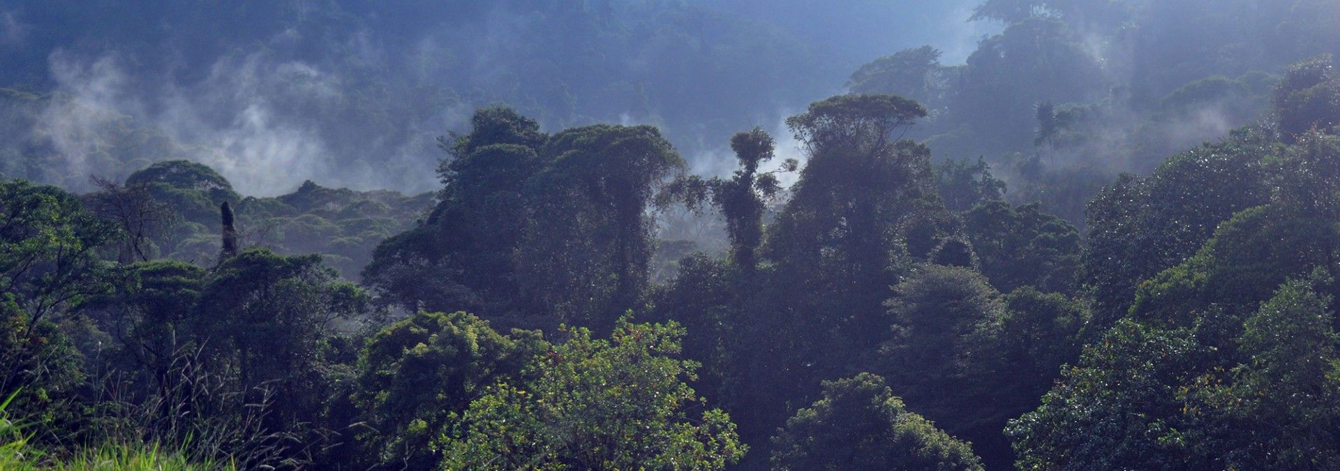 Costa_Rican_Rainforest_under_cloud.jpg
