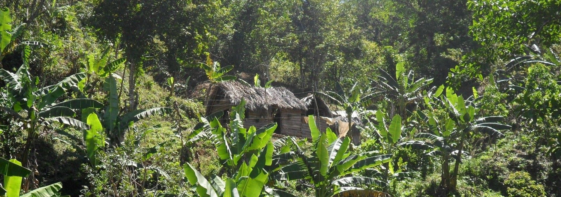Trekking through forest on varied terrain in Cuba