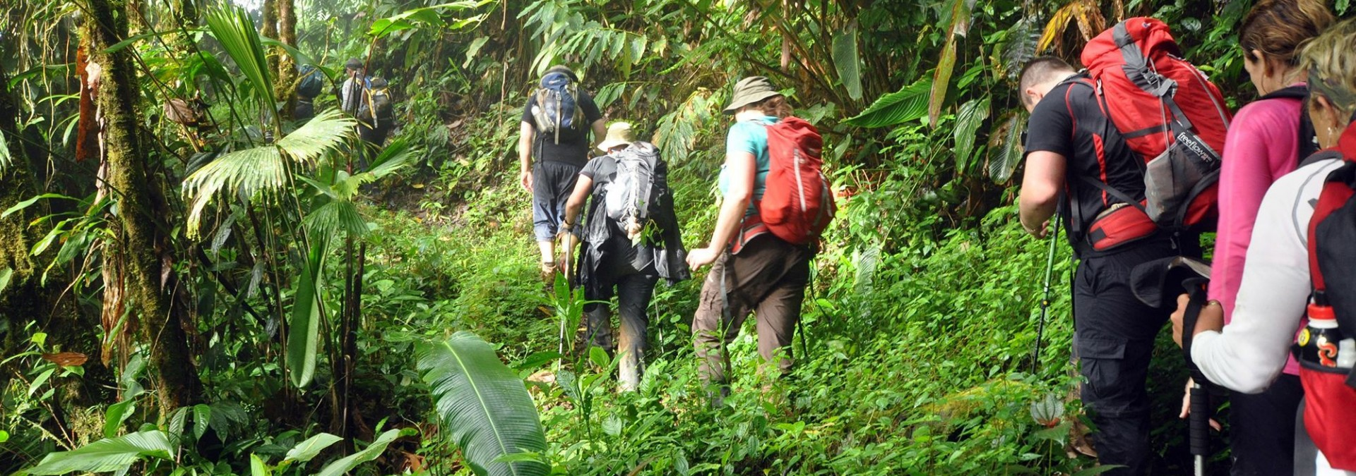 Jungle trekking in Costa Rica