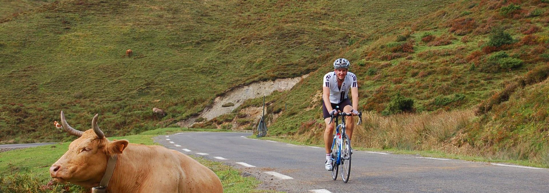 Cycling_uphill_by_Cow_wearing_bell_France.jpg