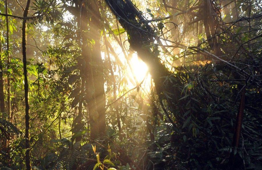 Coast To Coast Rainforest Trek Jungle Trek Costa Rica Discover Adventure