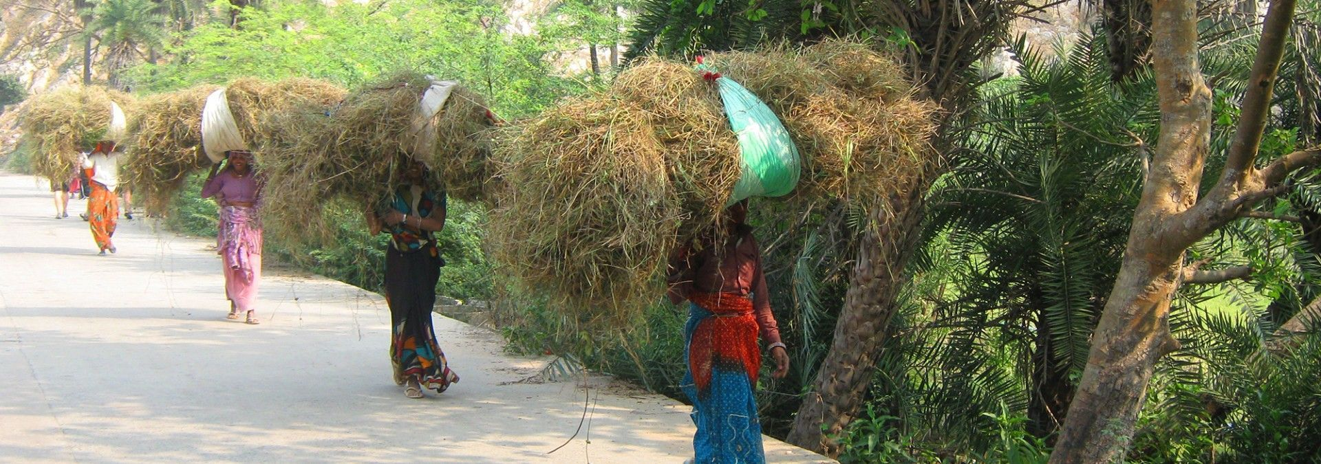 Ladies_of_India_carrying_grasses.jpg