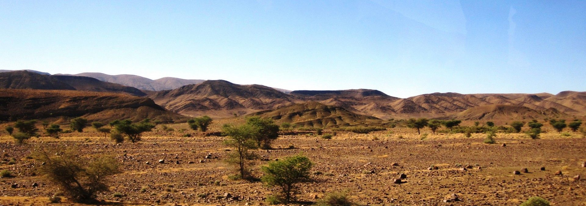 Scrubland_of_the_Sahara_Morocco.jpg
