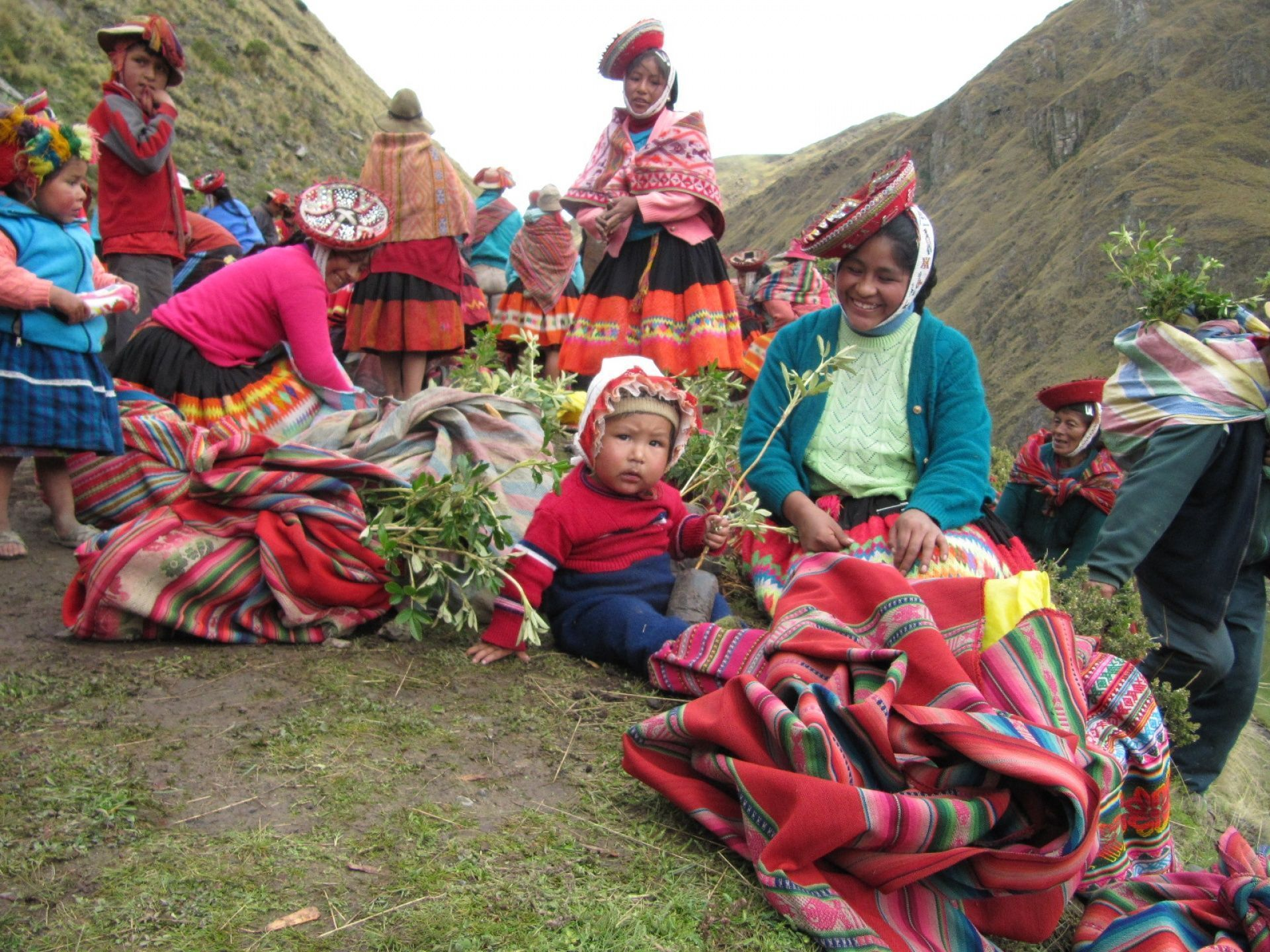 We've helped to plant 67,000 trees in Peru